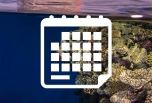 Calendario, Mar Rojo, Safari, Buceo