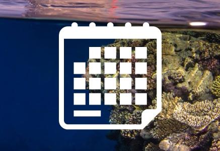 Calendario Rojo Dive Safari